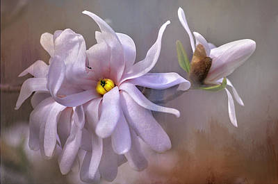 Photograph - Magnolia Peace by Bernadette Chiaramonte