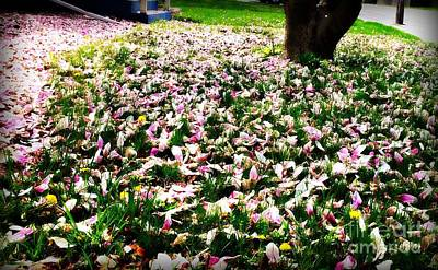Frank J Casella Royalty-Free and Rights-Managed Images - Magnolia Petals on the Lawn by Frank J Casella