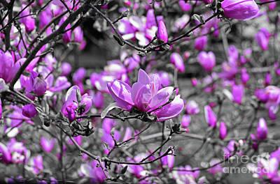 Photograph - Magnolia Pink by Patti Whitten