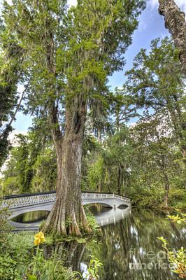 Magnolia Plantation Cypress Tree Art Print by Dustin K Ryan