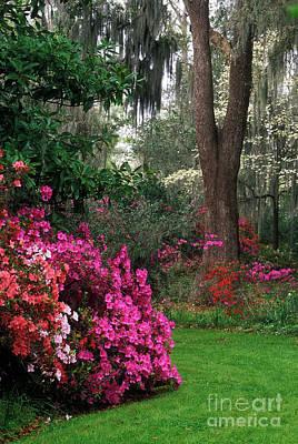 Photograph - Magnolia Plantation - Fs000148a by Daniel Dempster