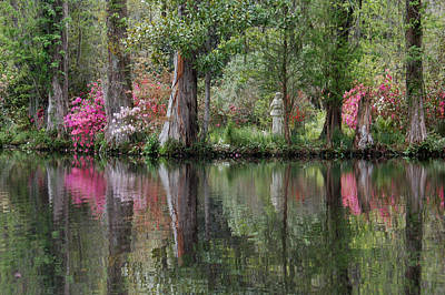 Magnolia Plantation Gardens Series Iv Print by Suzanne Gaff