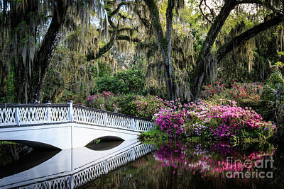 Photograph - Magnolia Plantation by Jennifer Ludlum