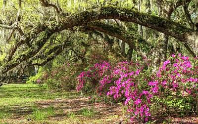 Photograph - Magnolia Plantation's Live Oaks And Azaleas  by Carol Montoya