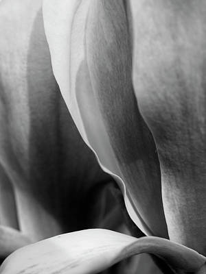 Photograph - Magnolia by Rod Stewart