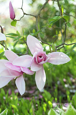 Photograph - Magnolia Star Wars Flower by Tim Gainey