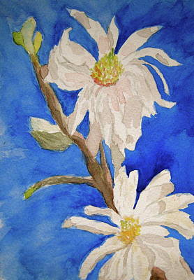 Magnolia Stellata Blue Skies Art Print by Beverley Harper Tinsley