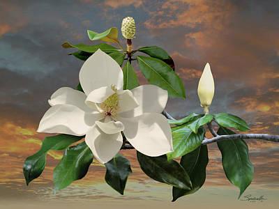 Magnolia Sunset Art Print