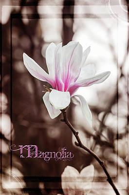 Photograph - Magnolia by Susan McMenamin
