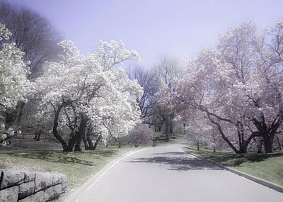 Photograph - Magnolia Time New York Botanical Garden by Julie Palencia