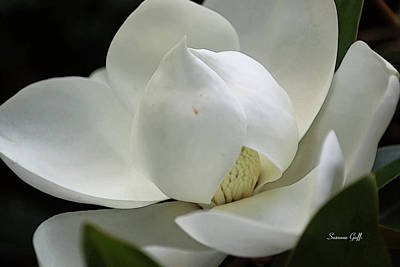 Giclee Digital Art - Magnolia Tiny Gem II by Suzanne Gaff