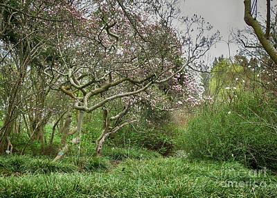 Photograph - Magnolia Tree 1 by Rudi Prott