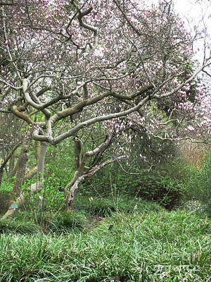 Photograph - Magnolia Tree 2 by Rudi Prott