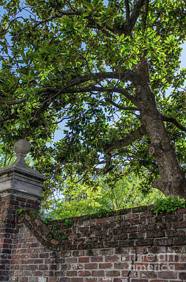 Photograph - Magnolia Tree And Charleston Brick by Dale Powell