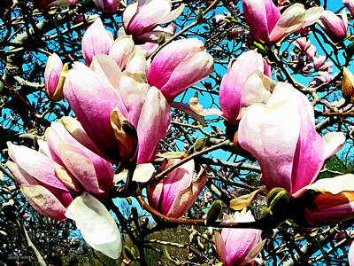 Photograph - Magnolia Tree Closeup by Susan Savad