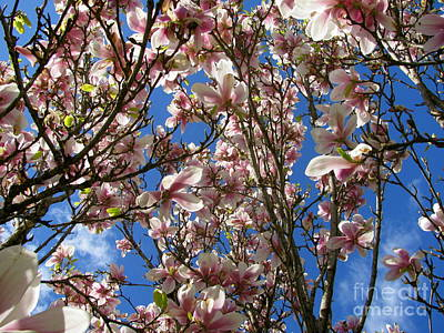 Photograph - Magnolia Tree by Leone Lund