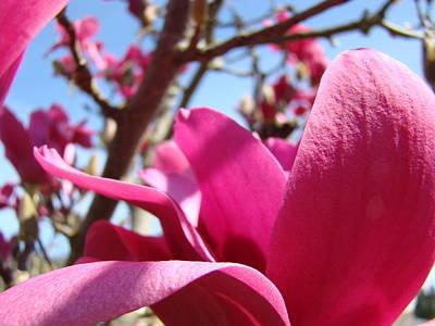 Magnolia Tree Pink Magnoli Flowers Artwork Spring Art Print by Baslee Troutman