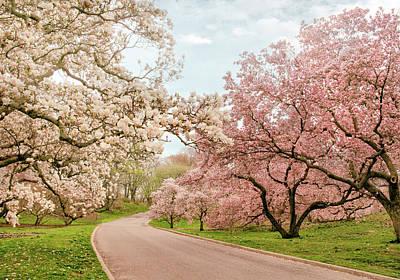 Photograph - Magnolia Way by Jessica Jenney