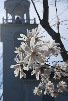 Photograph - Magnolia With Church Steeple by Margie Avellino