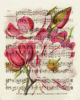Mixed Media - Magnolias and music sheet by Delphimages Photo Creations