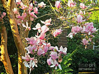 Photograph - Magnolias And Sunshine by Leanne Seymour