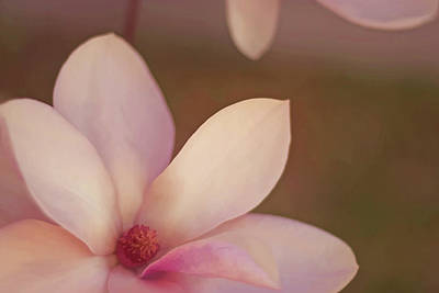 Photograph - Magnolias  by Angie Rayfield