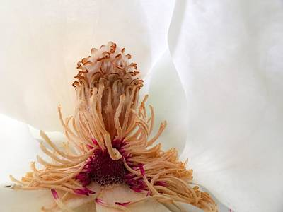 Archetype Photograph - Magnolia's Charm by Kathryn Stivers