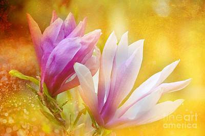 Magnolias Art Print by Elaine Manley