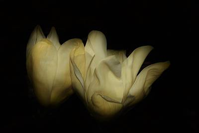 Photograph - Magnolias In Space by Karen Silvestri
