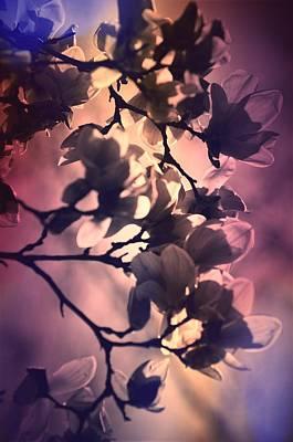 Pyrography - Magnolias by Karen Kersey