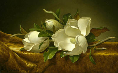 Magnolias On Gold Velvet Cloth  Art Print by Martin Johnson Heade