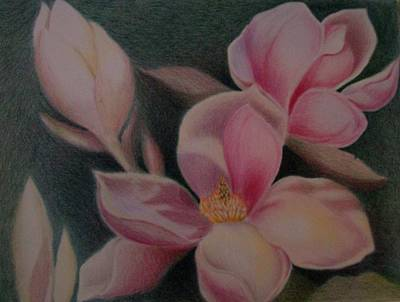 Magnolia Flower Drawing - Magnolias by Toni Tiu