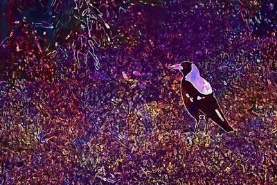 Magpies Digital Art - Magpie Australia Bird  by PixBreak Art