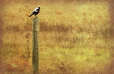 Magpies Digital Art - Magpie by Margaret Hormann Bfa