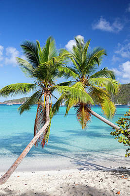 Photograph - Maho Bay Palms by Adam Romanowicz