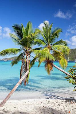 Tropical Photograph - Maho Bay Palms by Adam Romanowicz