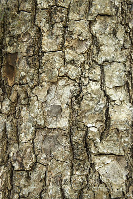 Mahogany Bark Art Print by Inga Spence