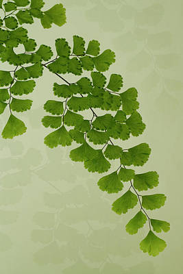 Photograph - Maiden Hair Fern With Shadows by Sandra Foster