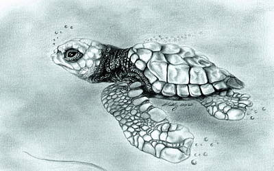 Ocean Turtle Drawing - Maiden Voyage by Kathleen Kelly Thompson