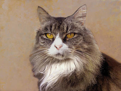 Photograph - Main Coon Cat Portrait  by Sandi OReilly