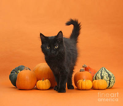 Photograph - Main Halloween Attraction by Warren Photographic