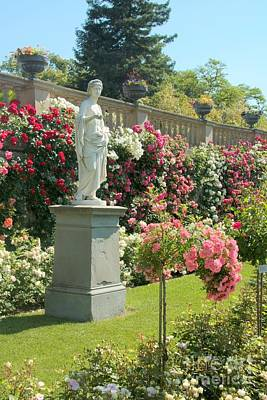 Photograph - Mainau Rose Garden by Frank Townsley