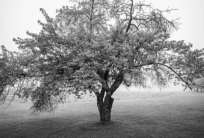 Art Print featuring the photograph Maine Apple Tree In Fog by Ranjay Mitra