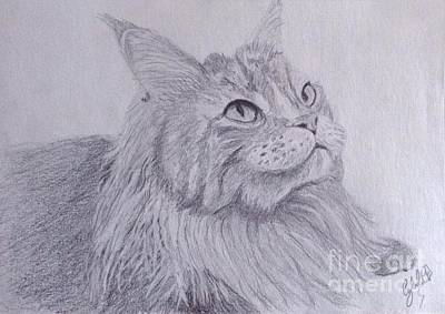 Wall Art - Drawing - Maine Coon Cat by Cybele Chaves