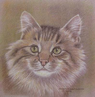 Maine Coon Cat Art Print by Dorothy Coatsworth