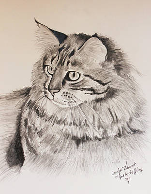Maine Coon Cat Dusty Art Print by Carolyn Valcourt