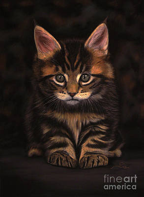 Maine Coon Kitty Art Print by Sabine Lackner