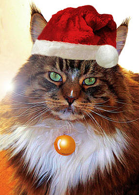 Photograph - Maine Coon Xmas by Roger Bester