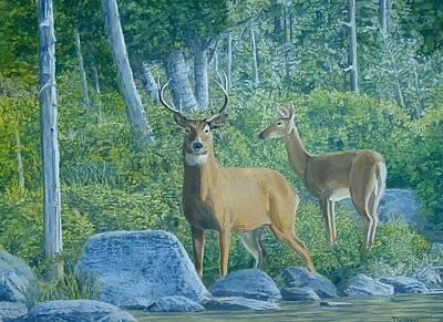 Maine Deer Art Print by Lee Thomason