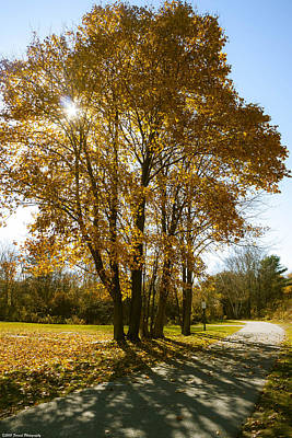 Photograph - Maine Foliage 2 by Debra Forand